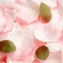 Satin Rose Petals